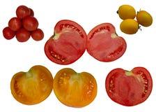 Pomidor Dojrzały. Fotografia Stock