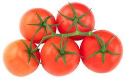 Pomidor Pomidor gałąź Pomidory odizolowywający na bielu Z ścinek ścieżką, odgórny widok obraz royalty free