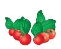 Pomidor i basil Fotografia Royalty Free