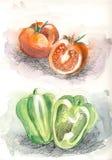 Pomidor i pieprz w kolorze Zdjęcia Stock