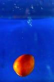 Pomidor kropli wodny finiszować Obraz Royalty Free