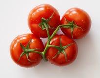 Pomidor miłość Zdjęcie Royalty Free