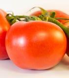 Pomidor na winogradzie obraz stock