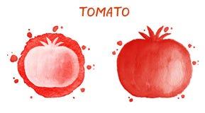 Pomidor Oryginalny akwarela rysunek Obrazy Stock