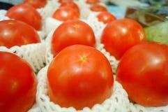 Pomidor, produkujący w Xinjiang, Chiny Obrazy Stock
