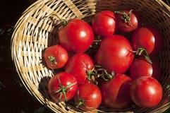 Pomidor w plenerowym Obrazy Stock