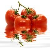 pomidor woda Zdjęcia Royalty Free