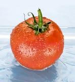 pomidor woda Zdjęcie Stock