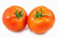Pomidor z kropli wodą Zdjęcia Stock