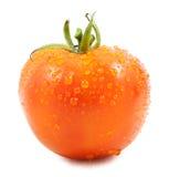 Pomidor z kropli wodą Zdjęcie Royalty Free
