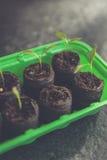 Pomidorowa hodowla Zdjęcia Stock