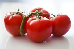 Pomidorowa miłość Zdjęcie Stock