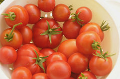 Pomidorowa uprawa Fotografia Royalty Free