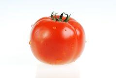 pomidorowy biel Obraz Royalty Free