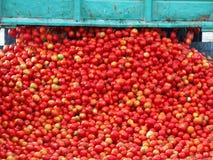 Pomidorowy przerób Zdjęcie Stock