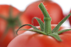 Pomidorowy trzon Fotografia Royalty Free