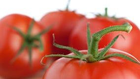 Pomidorowy trzon Zdjęcia Royalty Free
