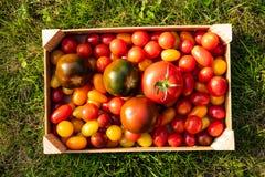 Pomidoru pudełko na trawie obraz royalty free