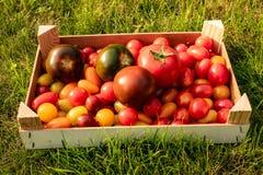 Pomidoru pudełko na trawie obrazy stock