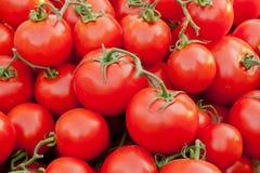 Pomidoru tło Fotografia Stock
