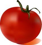 pomidoru wektor Obraz Royalty Free