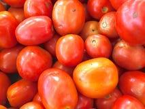 pomidory świeże Zdjęcia Royalty Free