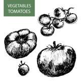 Pomidory. Obraz Stock