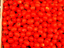Pomidory Zdjęcie Royalty Free