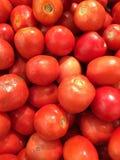 Pomidory Fotografia Royalty Free