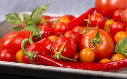 Pomidory, cebule, czosnek i ziele przygotowywający dla piec, Zdjęcie Stock