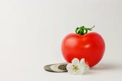 Pomidory i kwiaty Zdjęcia Royalty Free