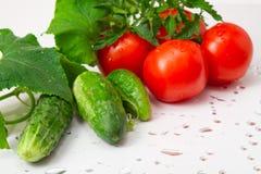 Pomidory i ogórki z waret kroplami. zdjęcie royalty free