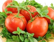 Pomidory Na łóżku ziele Fotografia Stock