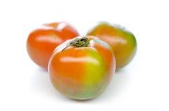Pomidory na biel Obraz Stock