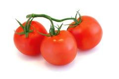 Pomidory na gałąź Fotografia Royalty Free