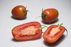 Pomidory na jasnopopielatym tle Zdjęcie Stock