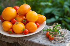 Pomidory na talerzu w ogródzie Zdjęcie Stock