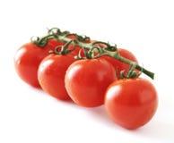 Pomidory na winogradzie Fotografia Royalty Free