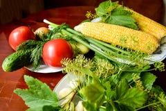 Pomidory, ogórek, koper, czosnek, zalewy i kukurudza, Zdjęcia Royalty Free