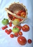 Pomidory przechylający Zdjęcia Royalty Free