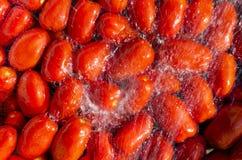 Pomidory robić kumberlandowi w domu Zdjęcie Stock
