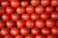 Pomidory w warzywo rynku Obraz Stock