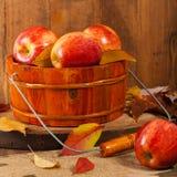 Pomme étiquetée organique Photographie stock libre de droits