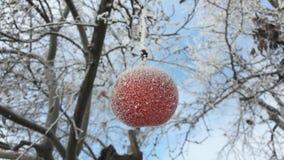Pomme congelée couverte de neige sur une branche dans le jardin d'hiver Macro des pommes sauvages surgelées couvertes de gelée photographie stock