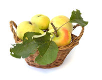 Pomme d'Eco Image libre de droits