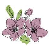 Pomme de floraison de dessin illustration libre de droits