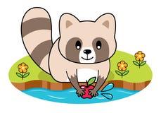 Pomme de lavage de raton laveur illustration libre de droits