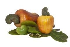 Pomme de noix de cajou sur le fond blanc d'isolement Image stock