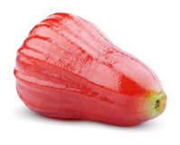 Pomme de Rose ou chomphu d'isolement sur le blanc Photo libre de droits