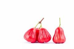 Pomme de Rose ou chomphu sur la nourriture saine de fruit de pomme rose de fond blanc d'isolement Images stock